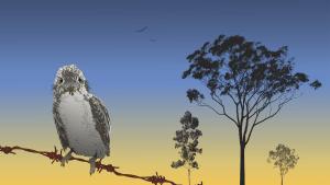 Kookaburra B1 Poster Print