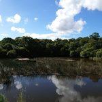 Wallsend Brickworks park pond